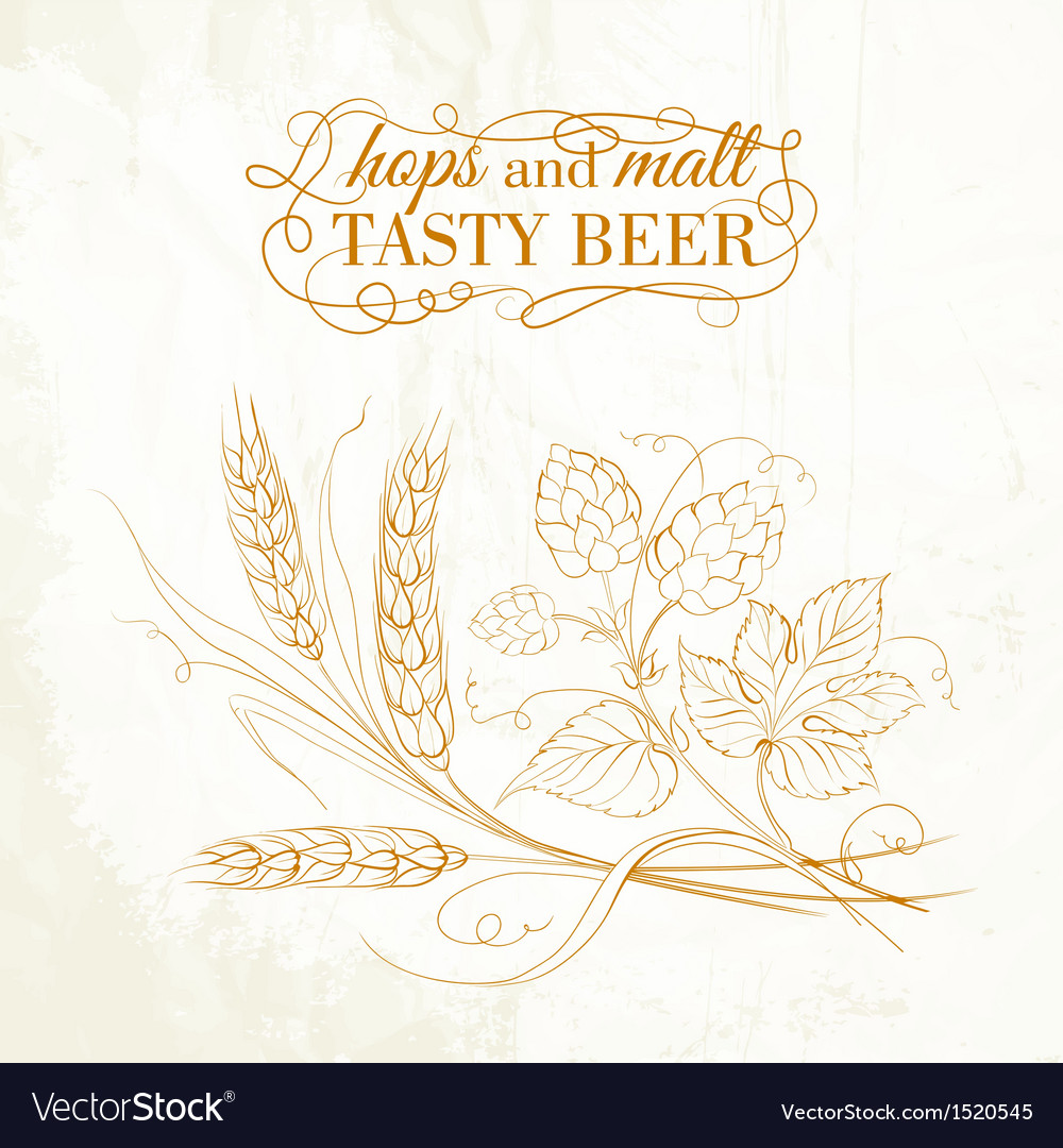 Golden wheat and hop on sepia vector | Price: 1 Credit (USD $1)