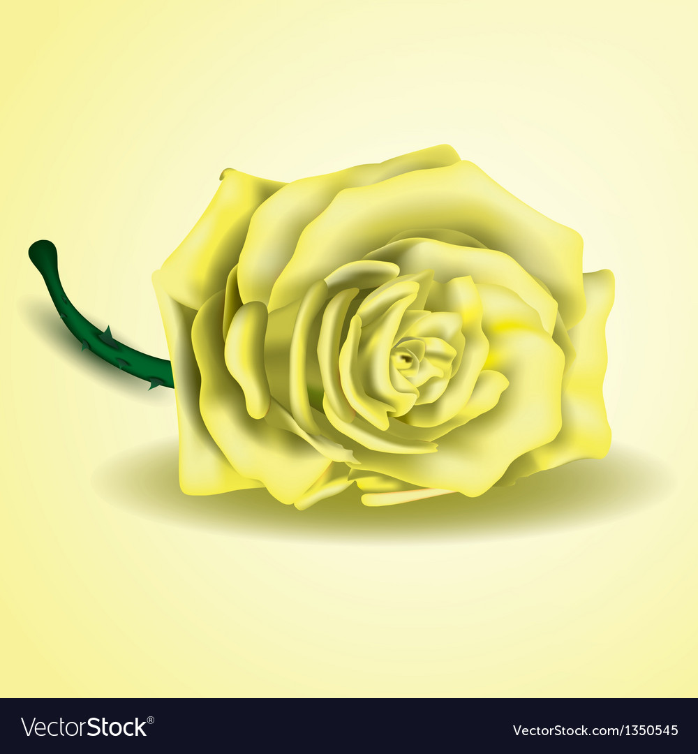 Yellow rose flower as close up vector | Price: 1 Credit (USD $1)