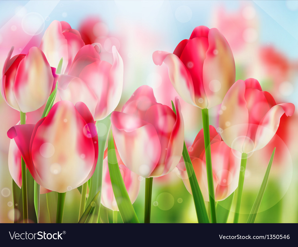 Red tulip with bokeh eps 10 vector | Price: 1 Credit (USD $1)
