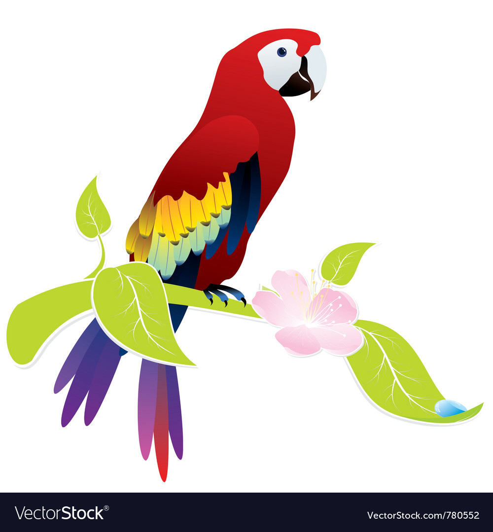 Exotic bird parrot vector | Price: 1 Credit (USD $1)