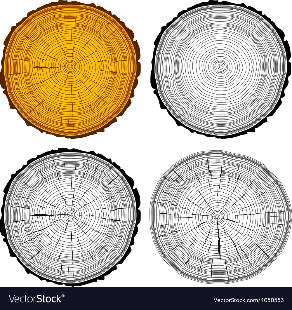 Set tree rings saw cut tree trunk background vector | Price: 1 Credit (USD $1)