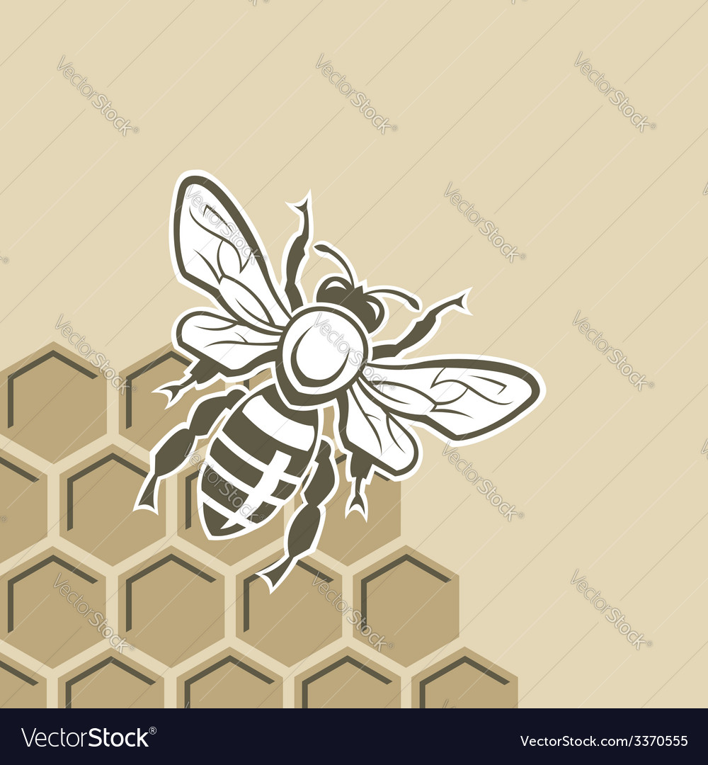 Bee and honey vector | Price: 1 Credit (USD $1)