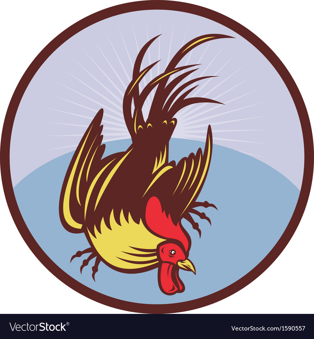 Rooster cockerel cock chicken vector | Price: 1 Credit (USD $1)