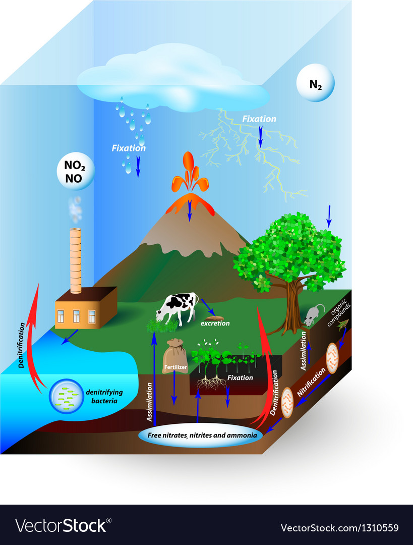 Nitrogen cycle vector | Price: 1 Credit (USD $1)