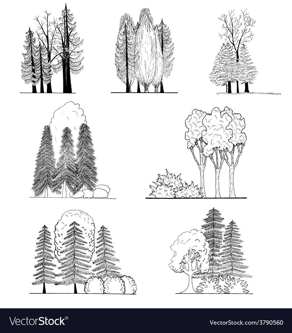 A set of tree silhouettes  for architectural or l vector | Price: 1 Credit (USD $1)