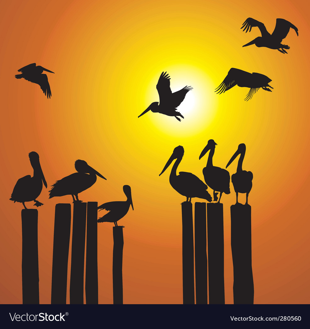 Silhouettes pelicans and sunset vector | Price: 1 Credit (USD $1)