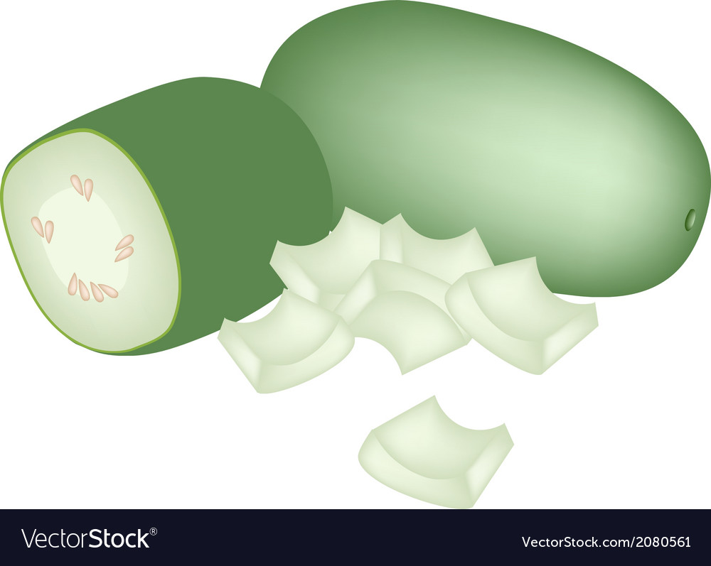 Fresh wax gourd on a white background vector | Price: 1 Credit (USD $1)