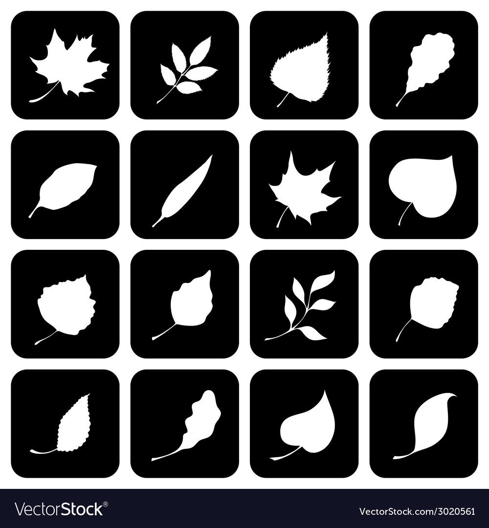 Set of square icons with various leaves vector   Price: 1 Credit (USD $1)