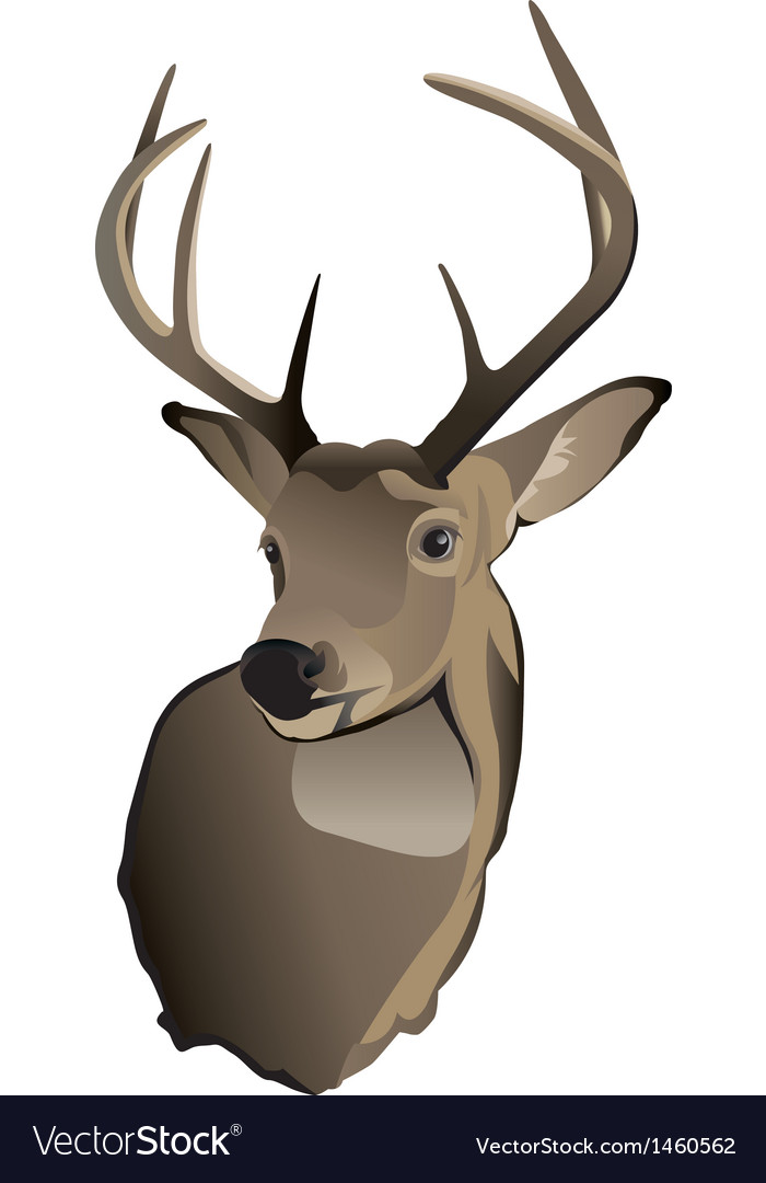 Whitetailed deer buck vector | Price: 1 Credit (USD $1)
