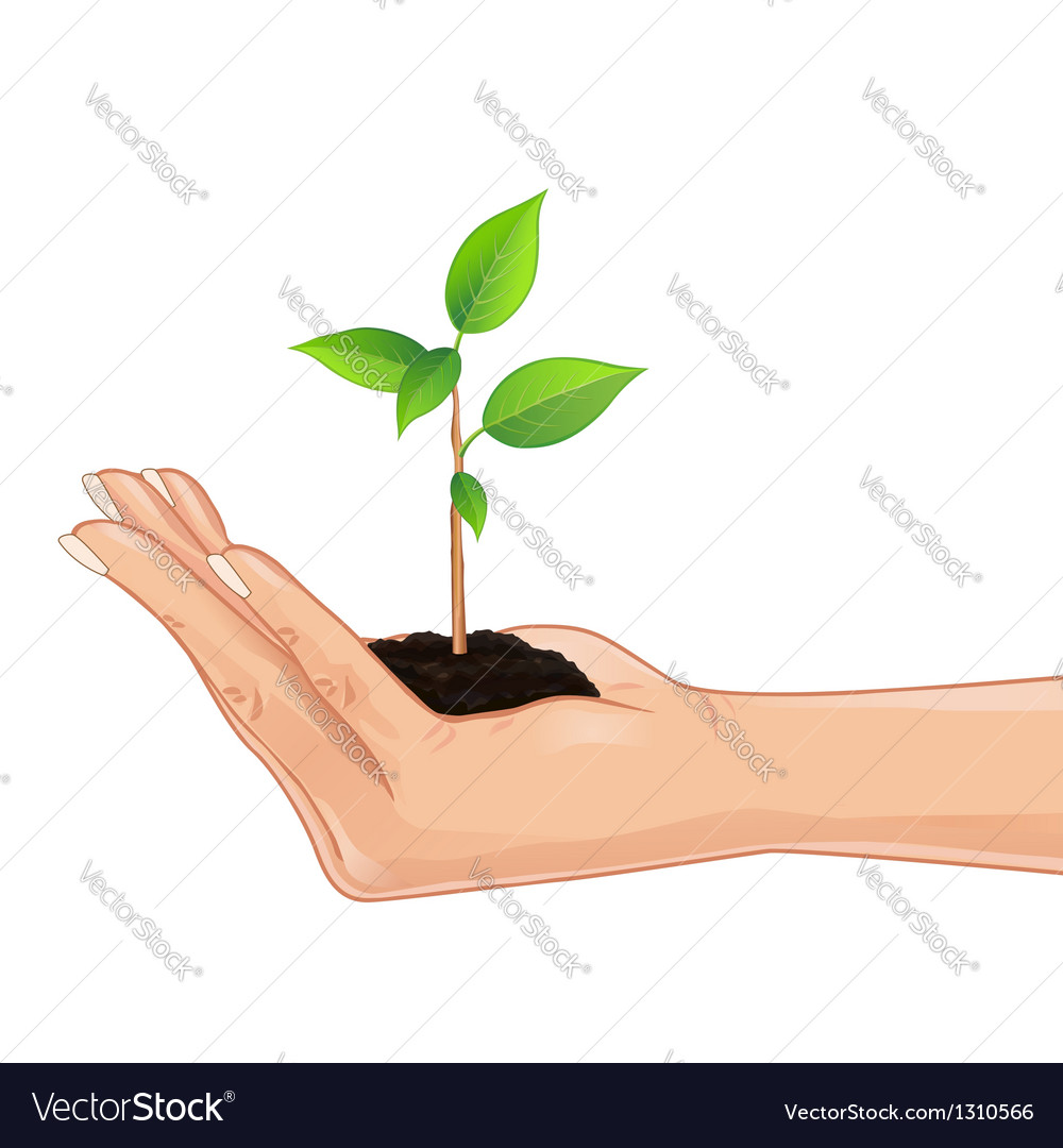 Hand holding a green plant vector | Price: 1 Credit (USD $1)