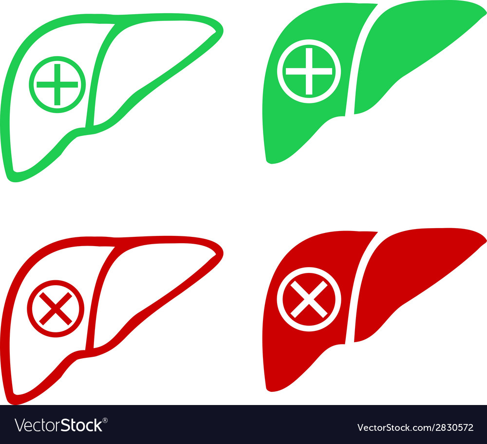 Human liver icon logo vector | Price: 1 Credit (USD $1)