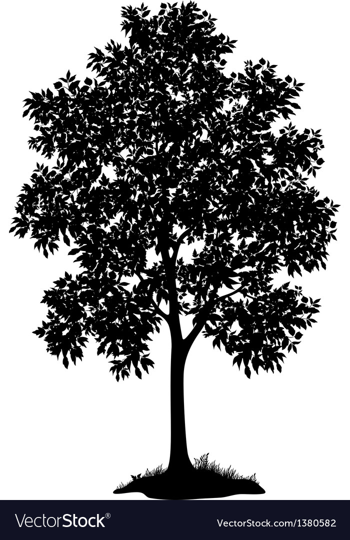 Maple tree and grass silhouette vector | Price: 1 Credit (USD $1)