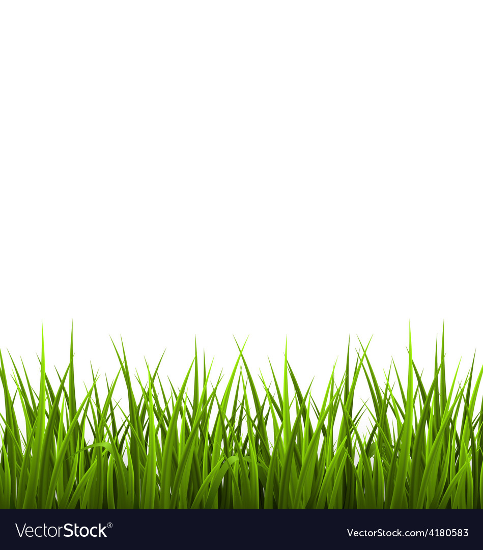 Green grass lawn isolated on white floral nature vector | Price: 1 Credit (USD $1)