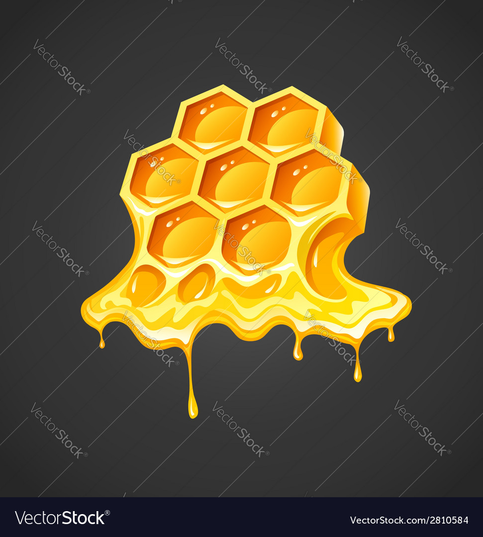 Honey in honeycombs vector | Price: 1 Credit (USD $1)