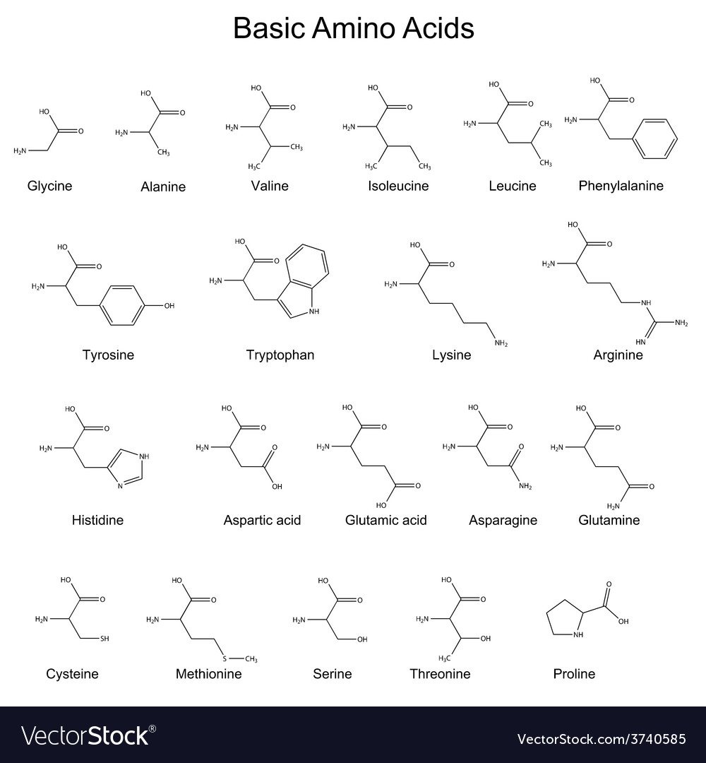 Chemical structures of basic amino acids vector