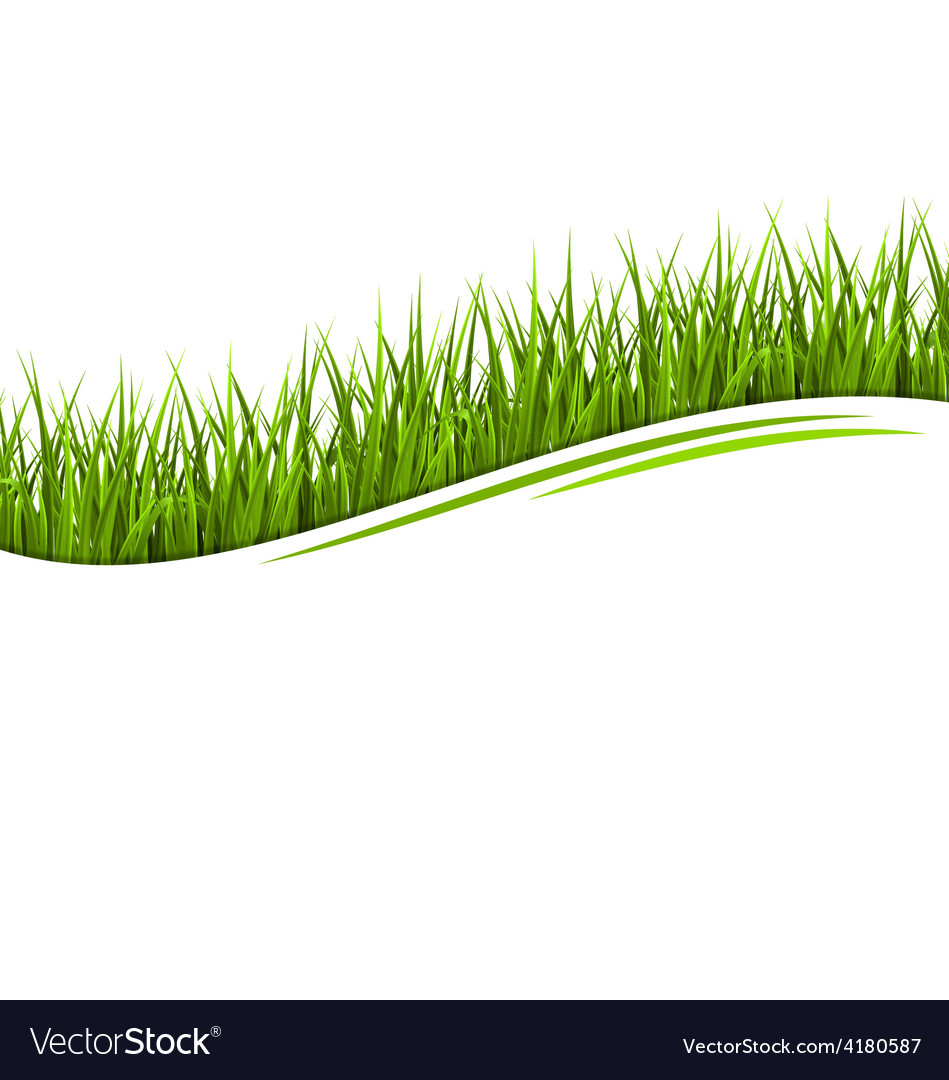 Green grass lawn wave isolated on white floral eco vector | Price: 1 Credit (USD $1)