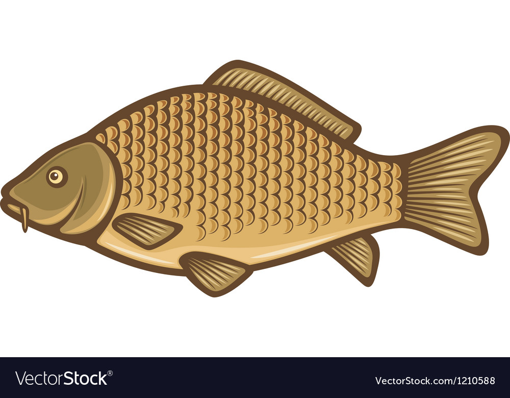 Carp fish vector | Price: 3 Credit (USD $3)