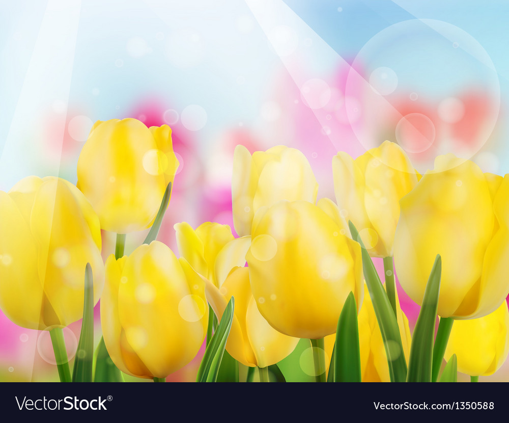 Yellow tulip with bokeh eps 10 vector | Price: 1 Credit (USD $1)