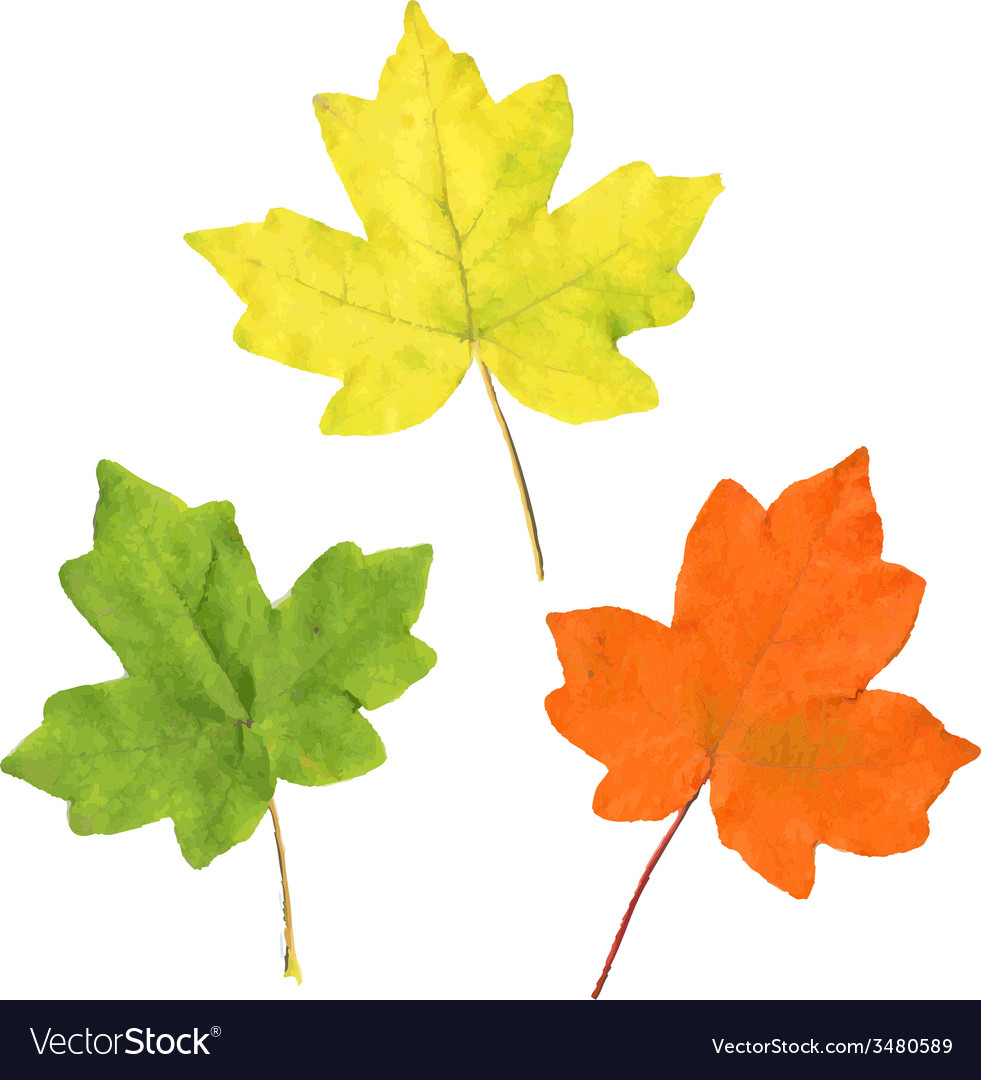 Color autumn leaves vector | Price: 1 Credit (USD $1)