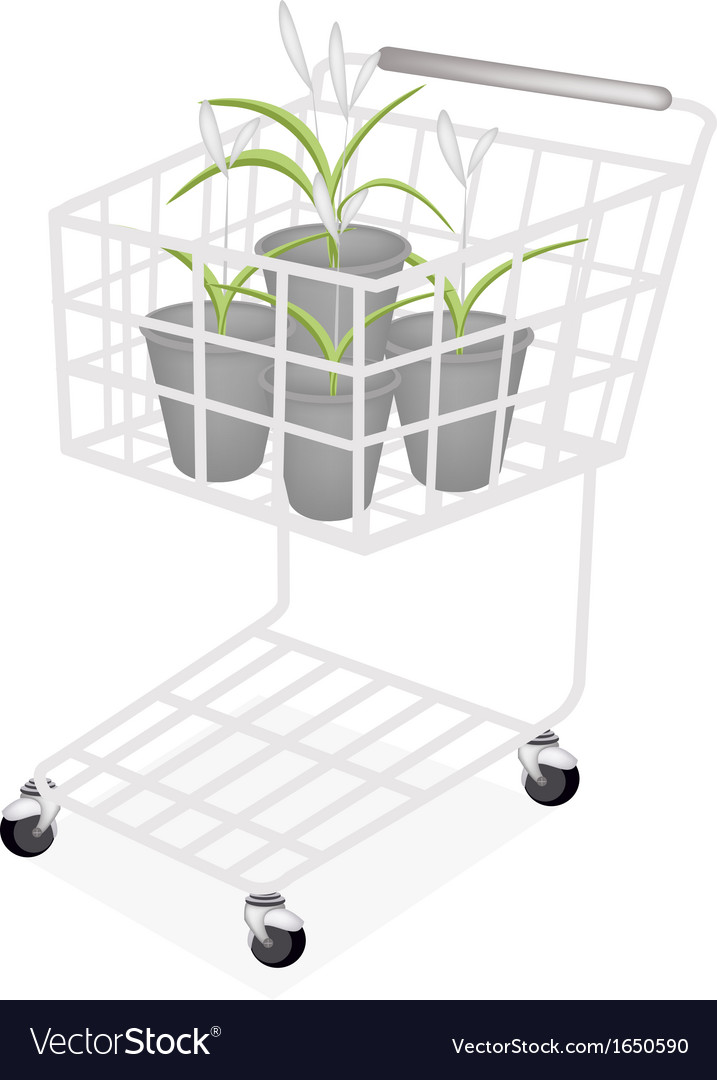 A set of dracaena plant in a shopping cart vector | Price: 1 Credit (USD $1)