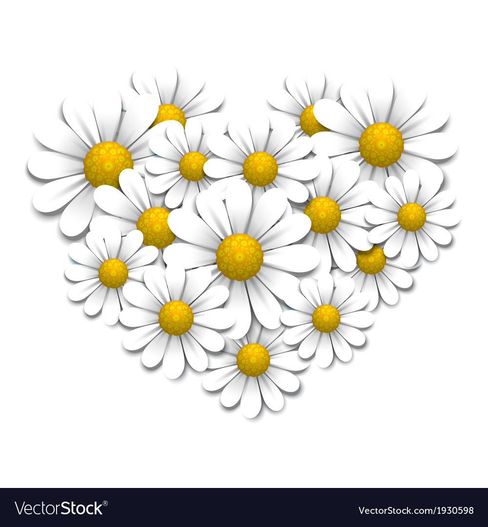 Camomiles in the shape of heart vector | Price: 1 Credit (USD $1)