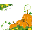 Pumpkins with leaves and flowers vector