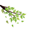 Green leaves tree branch vector