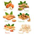 Collection of ripe nuts vector