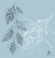 Feathers grey background white vector
