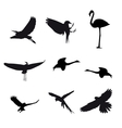 Set of different photographs of birds isolated on vector