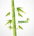 Bamboo stem abstract nature background vector
