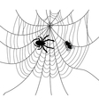 Spider web fly trap vector