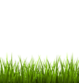 Green grass lawn isolated on white floral nature vector
