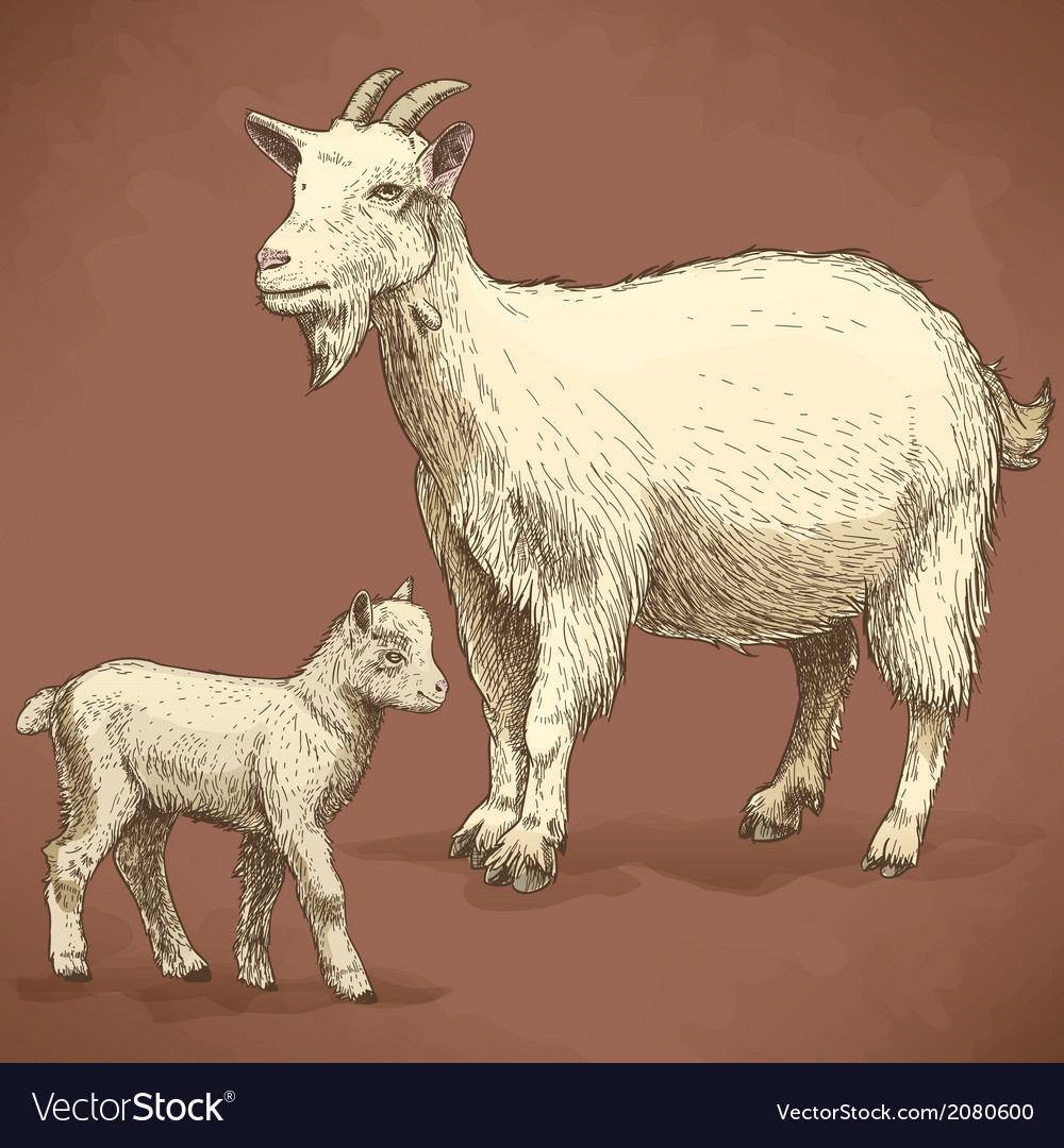 Engraving goat and kid retro vector | Price: 1 Credit (USD $1)