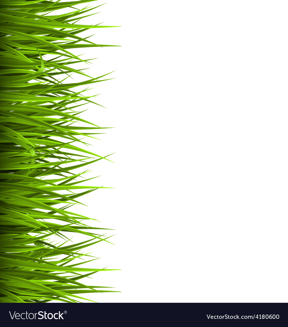 Green grass lawn isolated on white floral eco vector | Price: 1 Credit (USD $1)