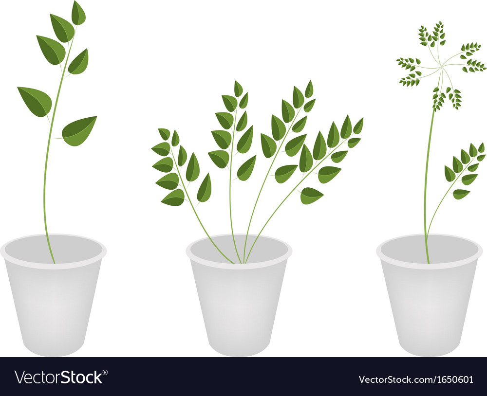 Beautiful green ferns in tree flower pots vector | Price: 1 Credit (USD $1)