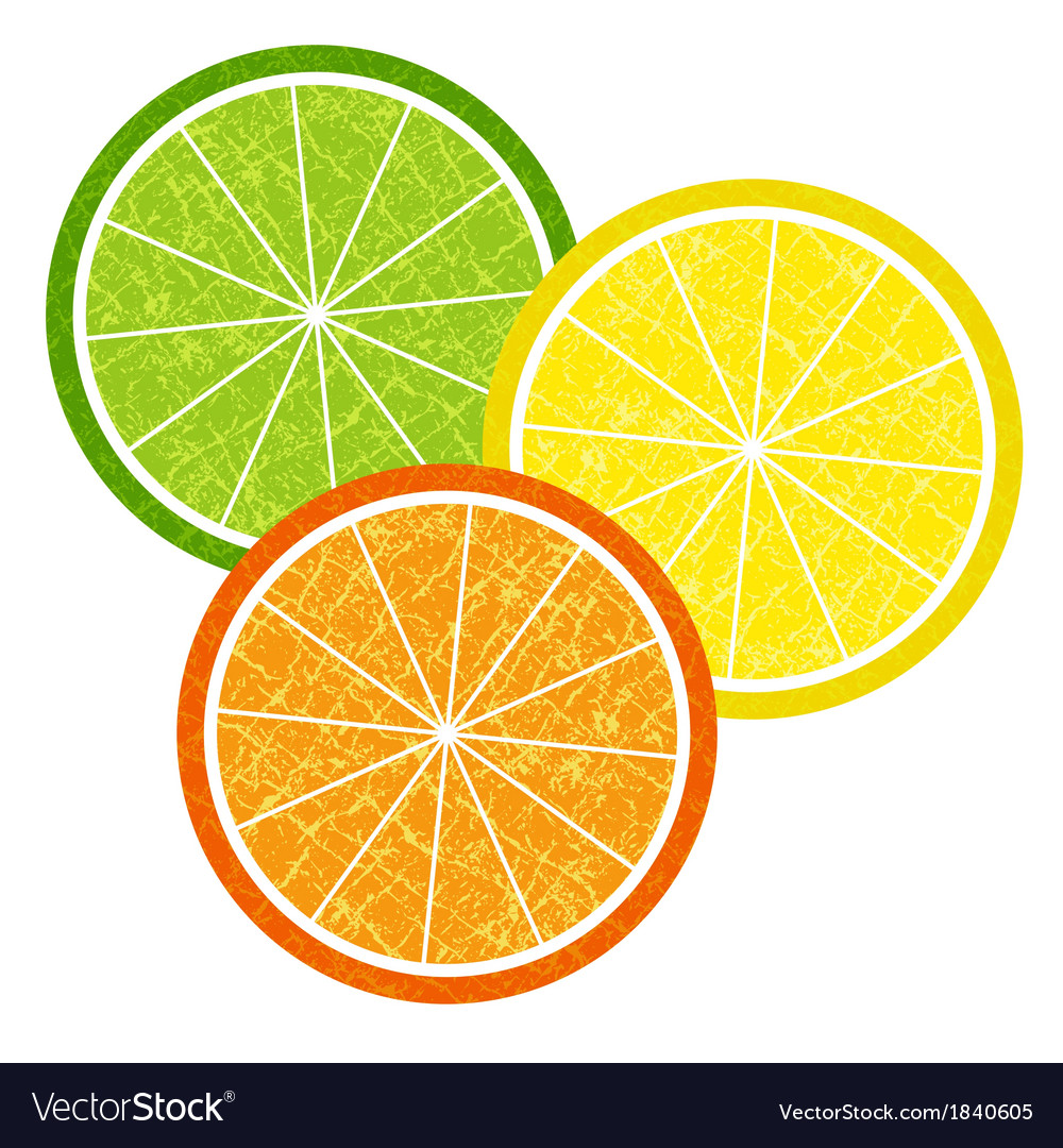 Colorful citrus slices set vector | Price: 1 Credit (USD $1)