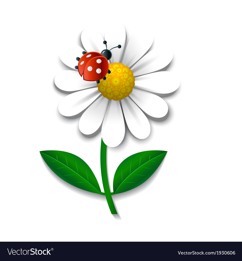 Camomile and ladybug vector | Price: 1 Credit (USD $1)