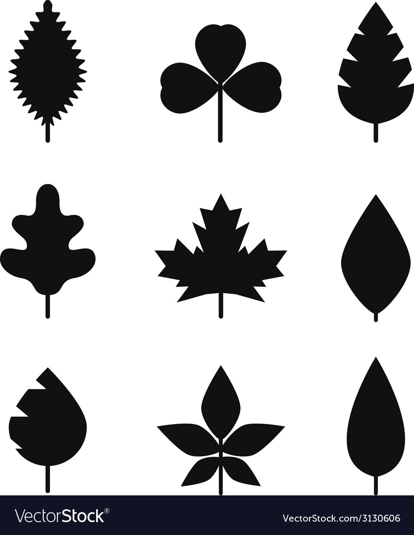 Different leaf silhouettes collection vector | Price: 1 Credit (USD $1)
