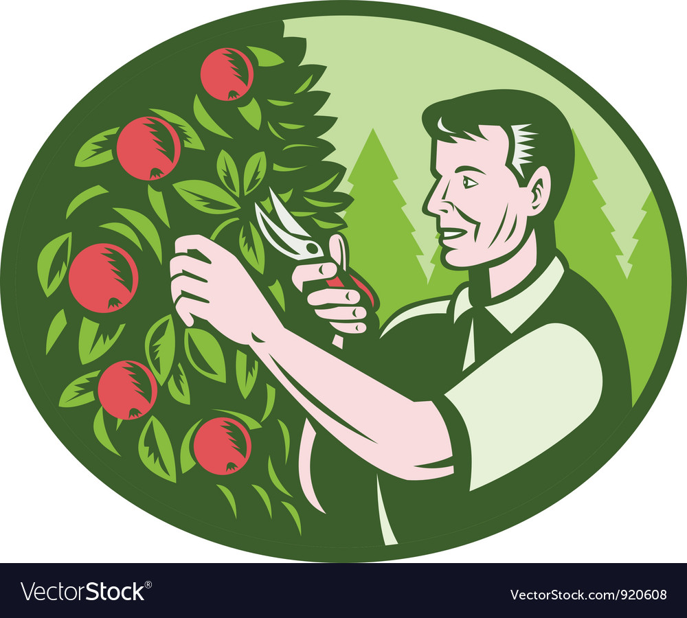 Horticulturist farmer pruning fruit vector | Price: 3 Credit (USD $3)