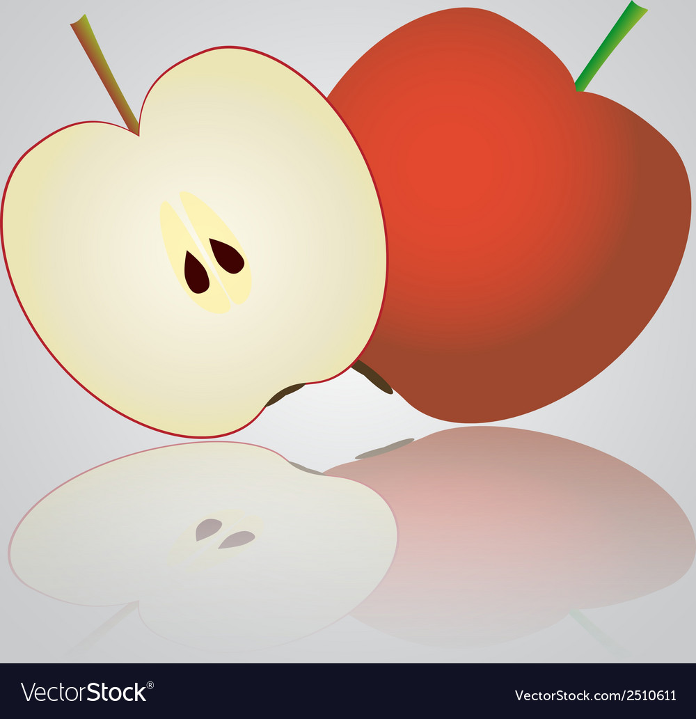 Colorful apple eps10 vector | Price: 1 Credit (USD $1)