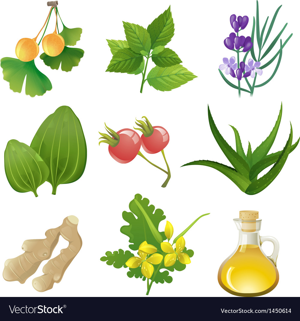 Herbal medicine vector | Price: 3 Credit (USD $3)