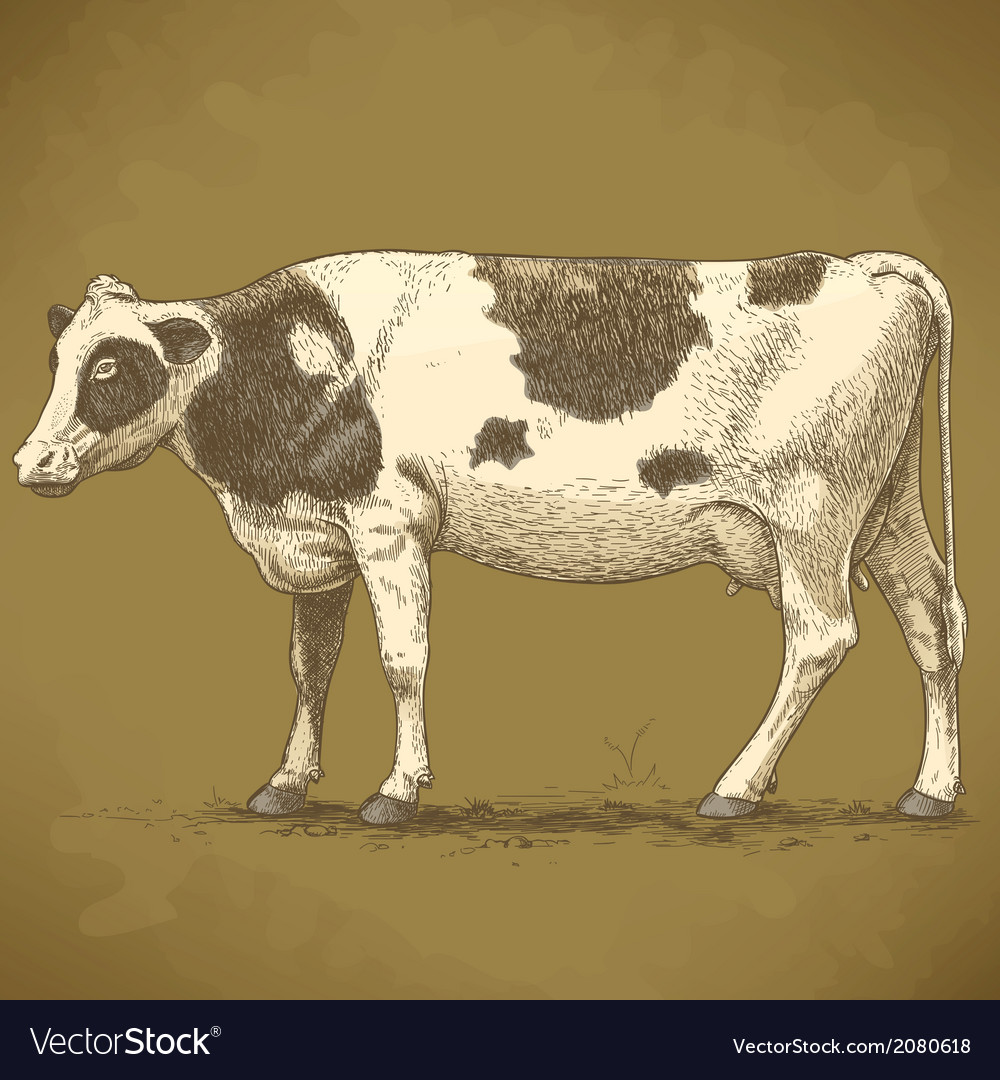 Engraving cow retro vector | Price: 1 Credit (USD $1)