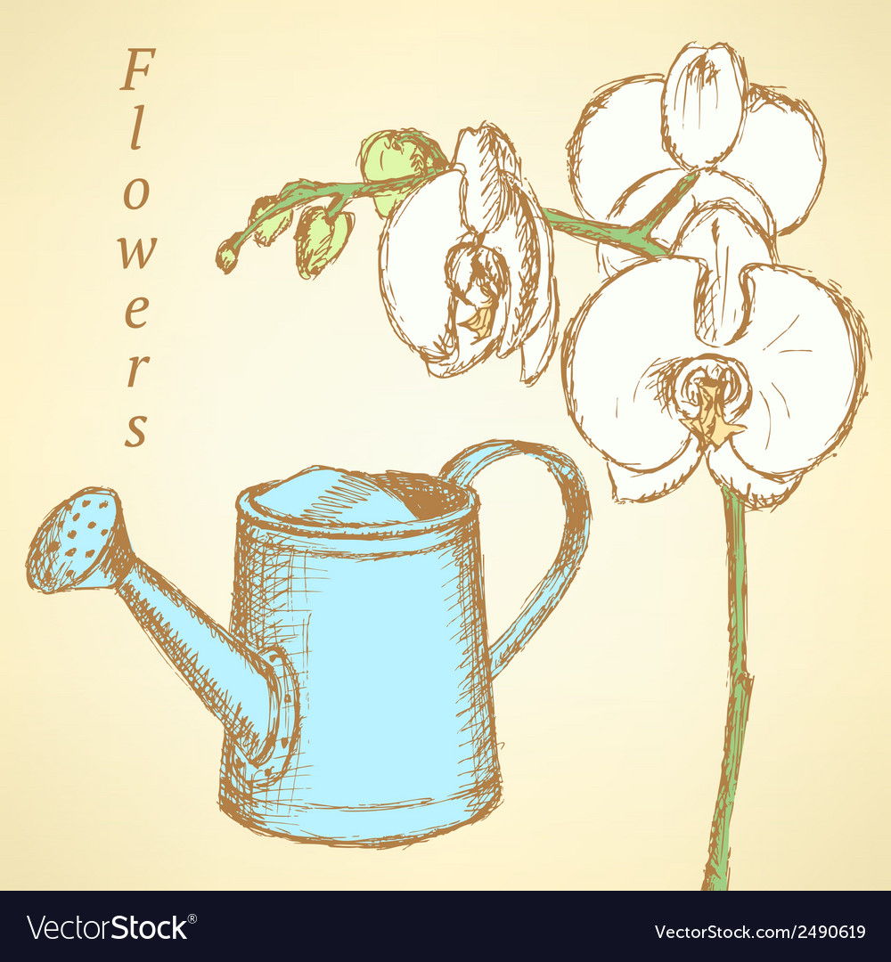 Watheringcan flowers vector | Price: 1 Credit (USD $1)