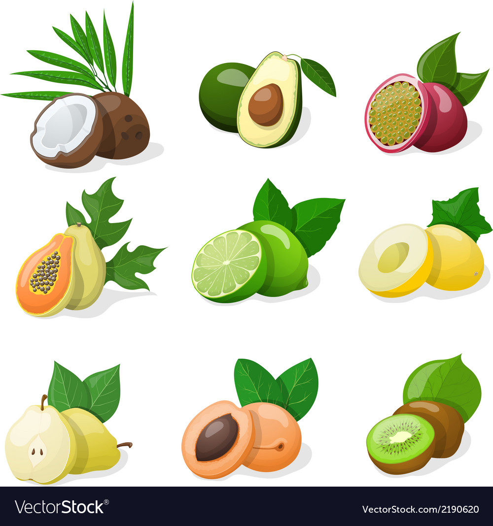 Set of exotic fruit vector | Price: 1 Credit (USD $1)