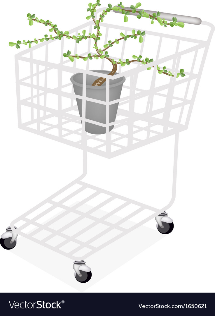 Bonsai tree and plant in a shopping cart vector | Price: 1 Credit (USD $1)