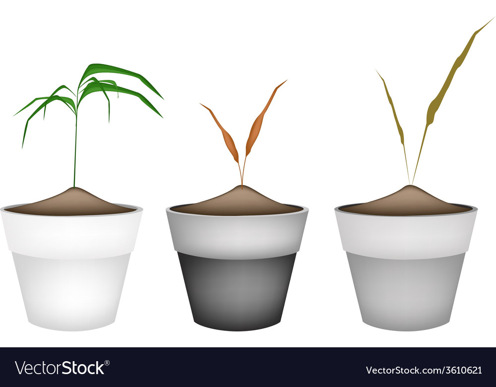 Three green grass in ceramic flower pots vector | Price: 1 Credit (USD $1)