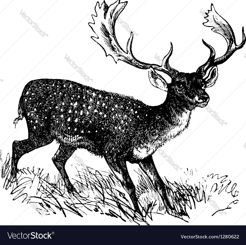 Fallow deer vintage engraving vector | Price: 1 Credit (USD $1)