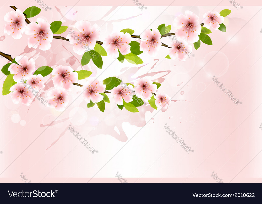 Spring background with blossoming sakura branches vector | Price: 1 Credit (USD $1)