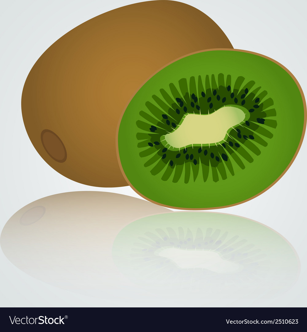 Colorful kiwi eps10 vector | Price: 1 Credit (USD $1)